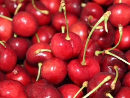 CS26ーサクランボ(生き残り戦略の勝者)Cherries (winner of the survival strategy)